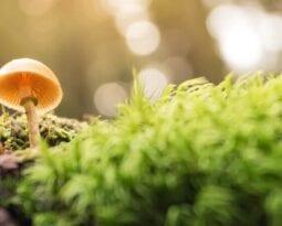 mushroom in nature