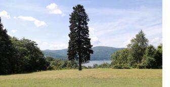 An Evergreen Metaphor: Strachan Donnelley, Dan Callahan, and Environmental Ethics