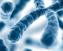 Synthetic Chromosomes