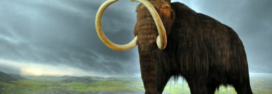 Illustrative image for The Elephant from Heaven and the Chicken from Hell–or: Colossal Fantasies