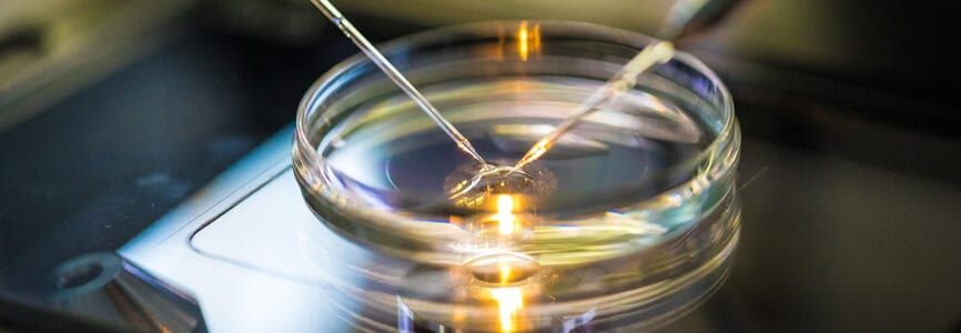 Artificial insemination in vitro-fertilization in a laboratory