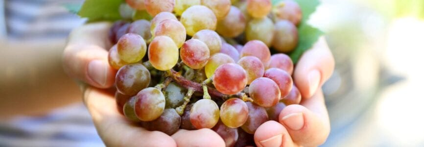 Illustrative image for Sweet Grapes at the End of Life