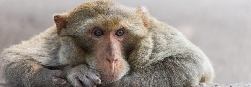 Illustrative image for Experiments on Nonhuman Primates: Q & A with Anne Barnhill